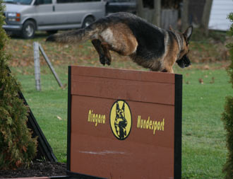 Show is Xena Einsamer-Wolf IPO1 jumping a 4 foot wall during training.